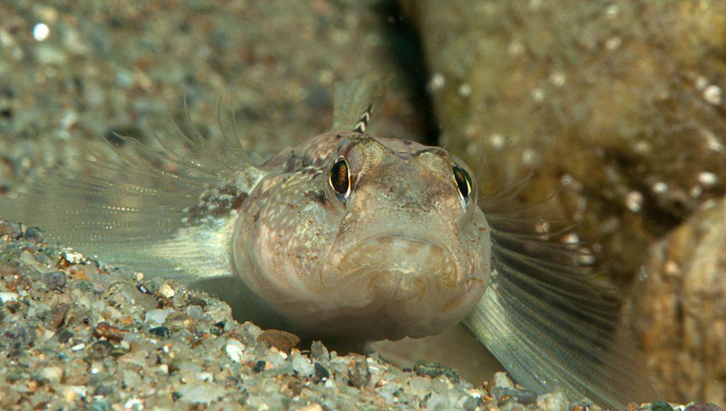 pesci usano tatto