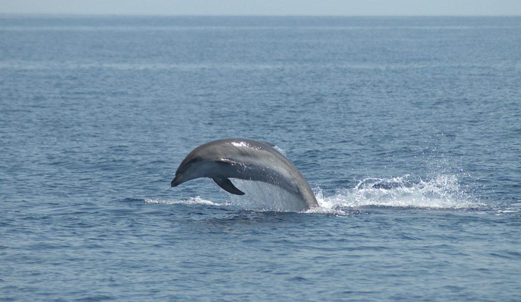 centro ricerca cetacei