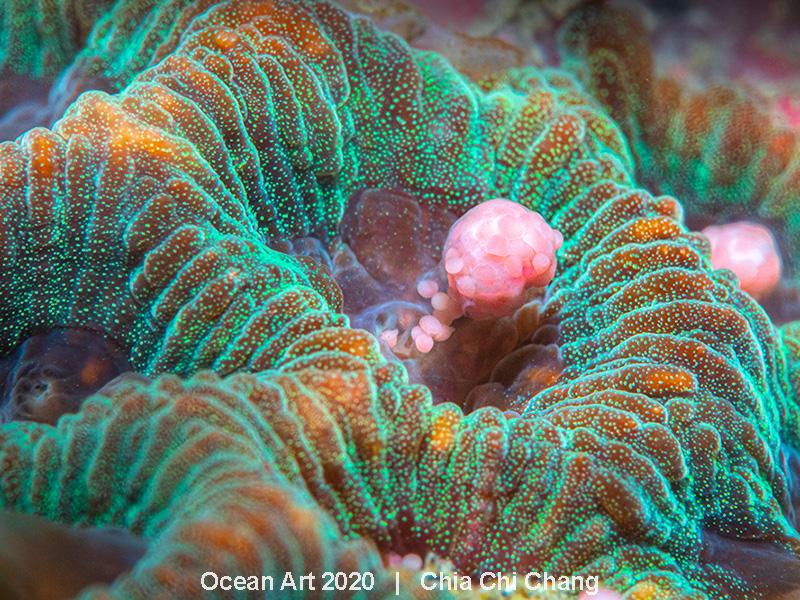 ocean art underwater 2020