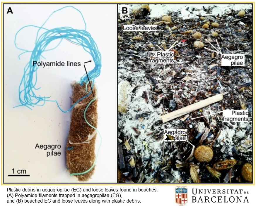 posidonia rimuovere plastica