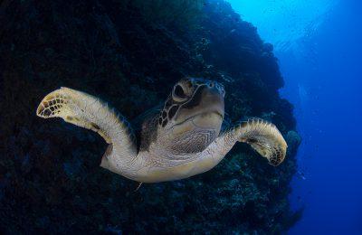 Tartarughe salvate dal congelamento