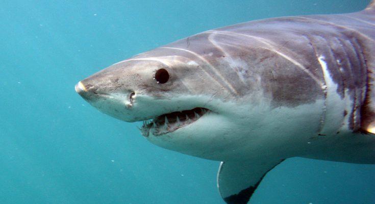 10 morti da squalo