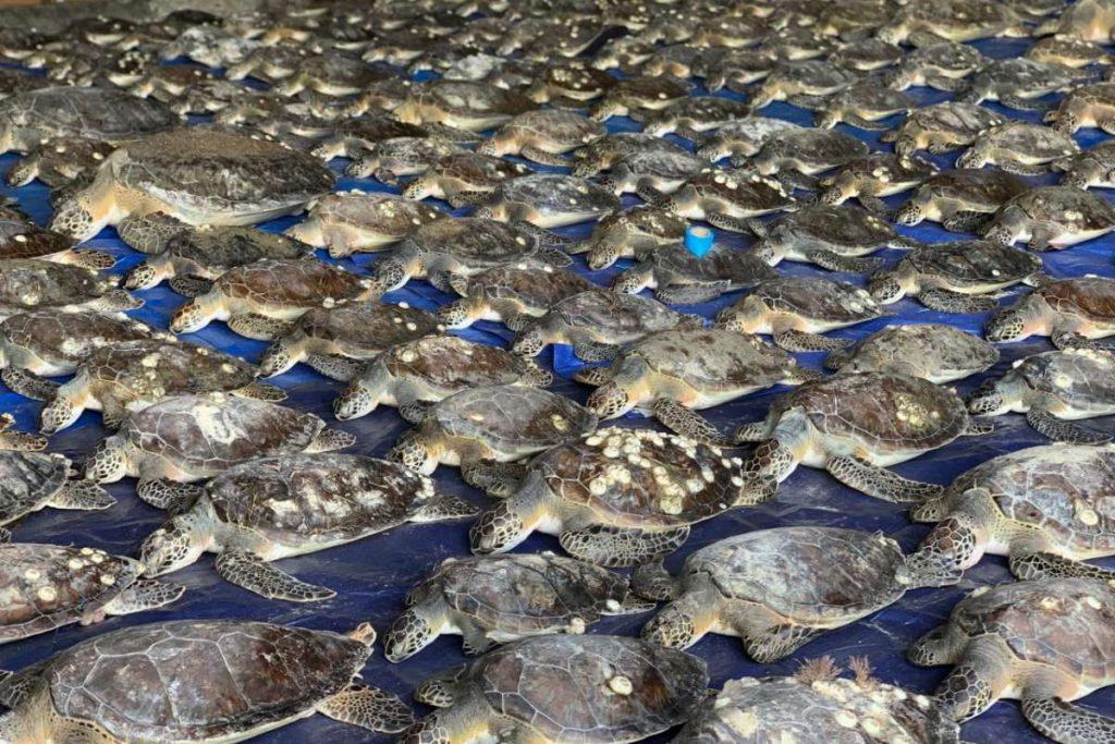 tartarughe salvate