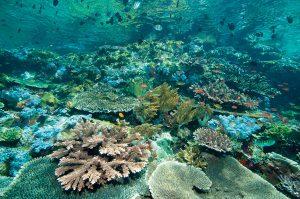 le migliori immersioni al mondo