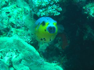 punti d'immersione alle Filippine