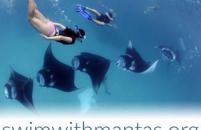 nuotare con le mante