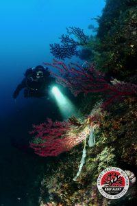 Reef Alert Network