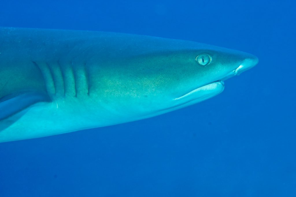 shark awareness day