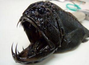 pesci ultra neri