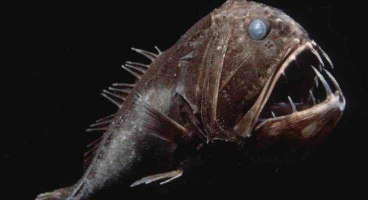 pesci utra neri
