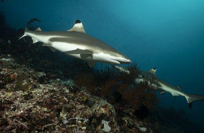 squali sociali
